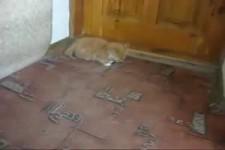 lustige kleine Katze