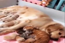 die ganze Tierfamilie ist zusammen