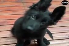 Hunde - die besten Freunde des Menschen
