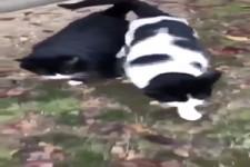 Verliebtes Katzen-Pärchen