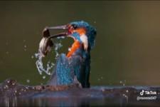 Vogel beim Fischfang