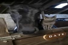 Katze und Pferd mögen sich