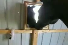 Ein Pferd entdeckt einen Spiegel