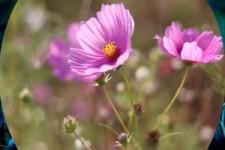 Fleurs 49 - Blumen 49