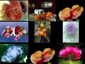 Perlas de flores - Still life - Blumenperlen - Stillleben