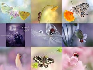 Rina Barbieri - Macrophotographie - Makrophotographie