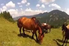 Das Pferd beisst