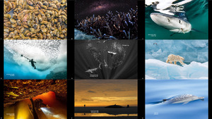 Ocean Photography Awards 2020 2-1