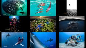 Ocean Photography Awards 2020 2-2
