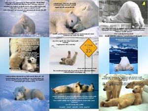 Eisbaeren Weisheiten