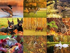Animals and Autumn