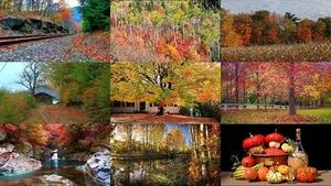 Beautiful Autumn 9