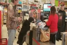 Hund kauft ein