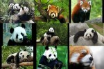 Panda.ppsx auf www.funpot.net