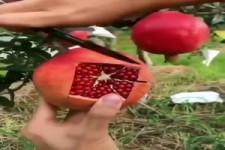 So schneidest du einen Granatapfel richtig an