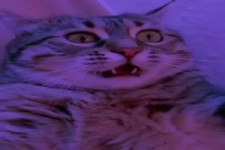 Der Katzen-Rave