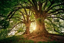 Arbres 03 - Bäume 03