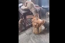 Lustige Tier - Momente