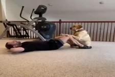 Tierischer Trainer