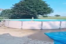 Hund freut sich auf den Pool