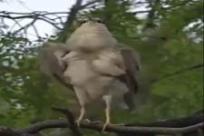 Beeindruckender Vogel