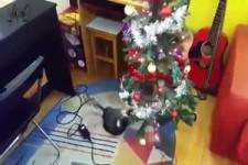 Katzen und der Weihnachtsbaum