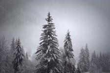 Hiver 54 - Winter 54