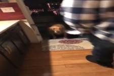 Hund sieht die offene Türe nicht