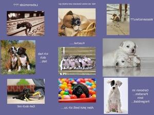 Hundige Grüsse