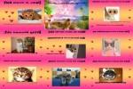 Lustige-Katzen.pps auf www.funpot.net
