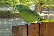 Zwitschernde Vögel