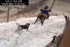 Katze traktiert Pferd