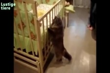 Katzen und Neugeborene