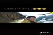 Walross in Love