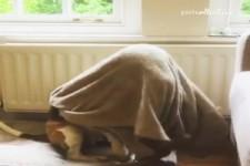 Hund legt sich unte die Decke