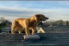Hund klettert aufs Dach