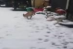 So-wenig-Berührung-mit-dem-Schnee-wie-möglich.mp4 auf www.funpot.net
