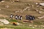 Lustige-Pinguine.mp4 auf www.funpot.net