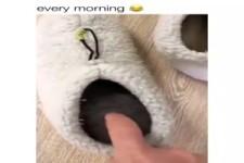 tolle Schuh-wärmer