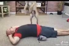 Hund leistet erste Hilfe