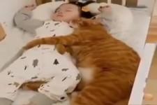 Katze liebt das Baby