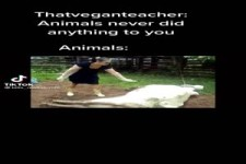 Tiere tun nie was