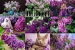 Flower-Of-My-Heart---Blume-meines-Herzens.ppsx auf www.funpot.net