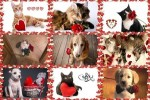Be-My-Valentine-3---Sei-mein-Valentinstag-3.ppsx auf www.funpot.net