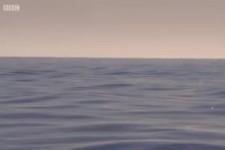 Ryby Poisson Vis Fish