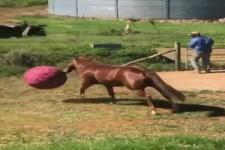 Das Pferd und sein Ball