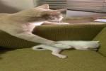Katzen-Mutti.mp4 auf www.funpot.net