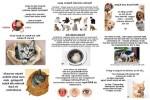 Wer-die-Katze-im-Sack-kauft-hat-ein-Problem.pps auf www.funpot.net