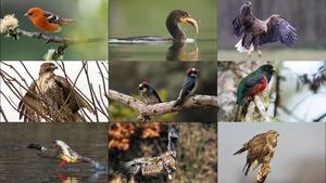BIRDS 4 - Vögel 4
