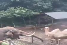 Elefant hat Spaß